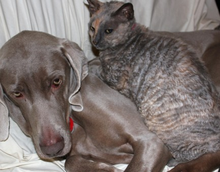 Cats | We love cats of all breeds shapes sizes and temperaments