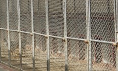 outdoor dog pens with wire mesh